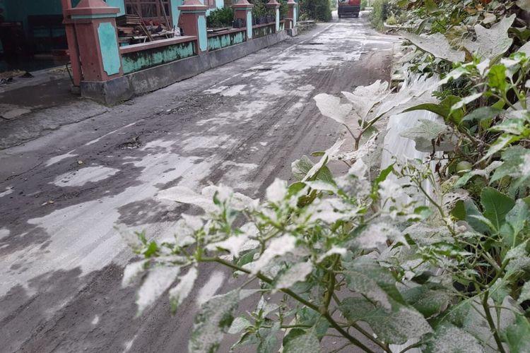 Abu tipis material erupsi Gunung Merapi menempel pada tanaman di wilayah Sawit, Boyolali, Jawa Tengah, Selasa (3/3/2020).