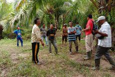 5 Sapi Dimangsa Harimau, Warga Mengungsi dan BKSDA Turunkan Pawang