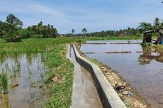 Berkat RJIT, Produktivitas Pertanian Poktan di Padang Pariaman Ini Melonjak