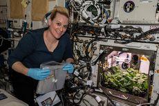Pertama Kalinya, Astronot NASA Panen Lobak di Stasiun Luar Angkasa