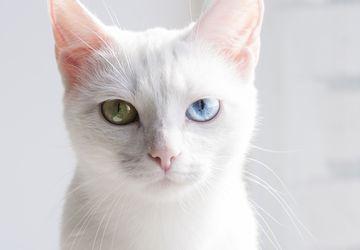 Alasan Kucing Suka Menatap Dinding