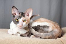 Penyebab Kucing Tidak Merespons Ketika Dipanggil Pemiiknya