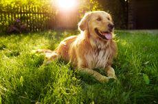 Sadarkah Anda, Anjing Buta Warna Merah dan Hijau?