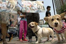 11 Juta Warga Tanda Tangani Petisi Anti-Festival Makan Anjing di China