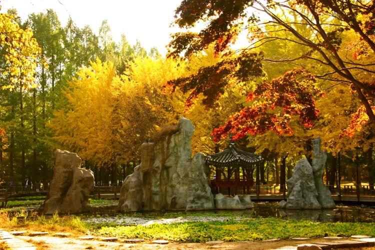 Musim gugur di Pulau Nami, Korea Selatan.
