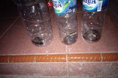 Teror Anakan Kobra di Wonosari, Warga Ketakutan, Satu Keluarga Terpaksa Mengungsi