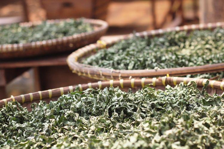 Daun sacha inchi bisa diolah sebagai bahan minuman seperti halnya daun teh dan diklaim punya rasa yang lebih segar.