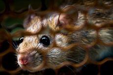 PPKM Level 4, Cegah Tikus Bersarang di Mesin Mobil Saat Parkir