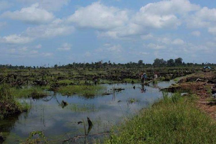 Ilustrasi lahan gambut di Riau.