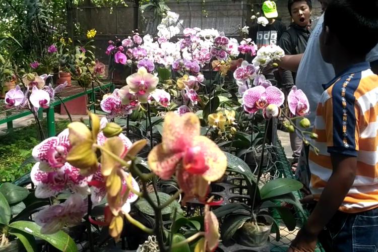 Koleksi bunga anggrek di Kampoeng Anggrek Kediri, Jawa Timur, Minggu (11/2/2018).