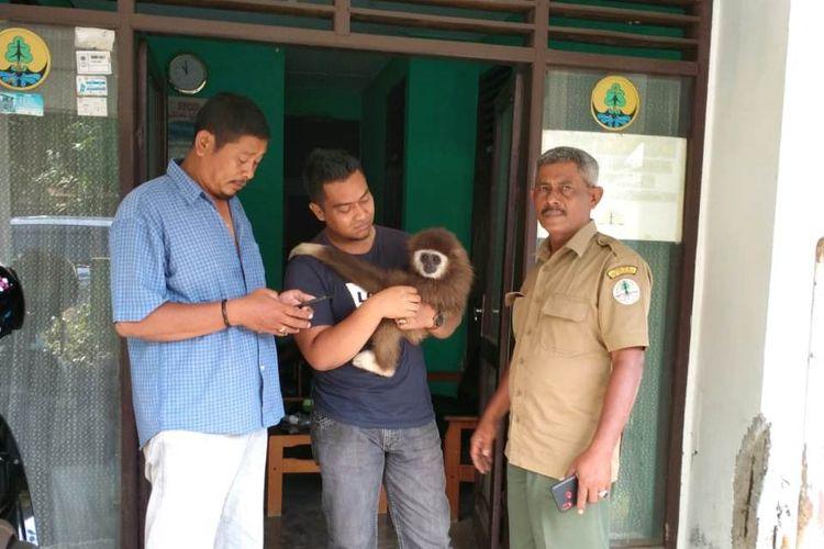 Petugas BKSDA Lhokseumawe menerima owa dari masyarakat di Lhokseumawe, Senin (20/1/2020)