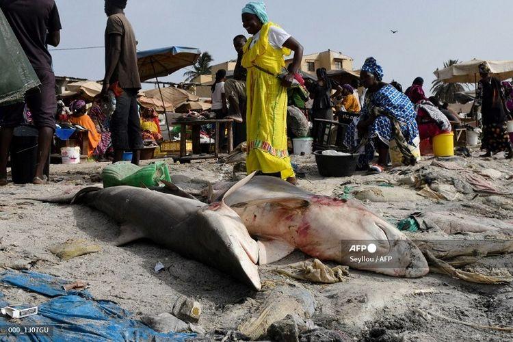 Ilustrasi hiu yang ditangkap untuk diasinkan dan dijual. Foto ini diambil pada 22 Juli 2019, menunjukkan orang-orang yang berjalan melewati hiu yang ditangkap dan tergeletak di pantai Hann sebelum di-fillet untuk dijual, di Dakar, Senegal, Afrika Barat.