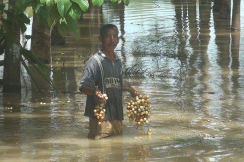 Warga Prabumulih Terpaksa Panen Buah Rambai di Tengah Banjir