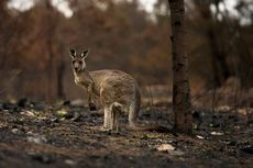 Perubahan Iklim, Australia Jadi Negara Terpanas dan Terkering 2019