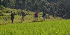 Sektor Pertanian dan Citra Indonesia di Mata Dunia