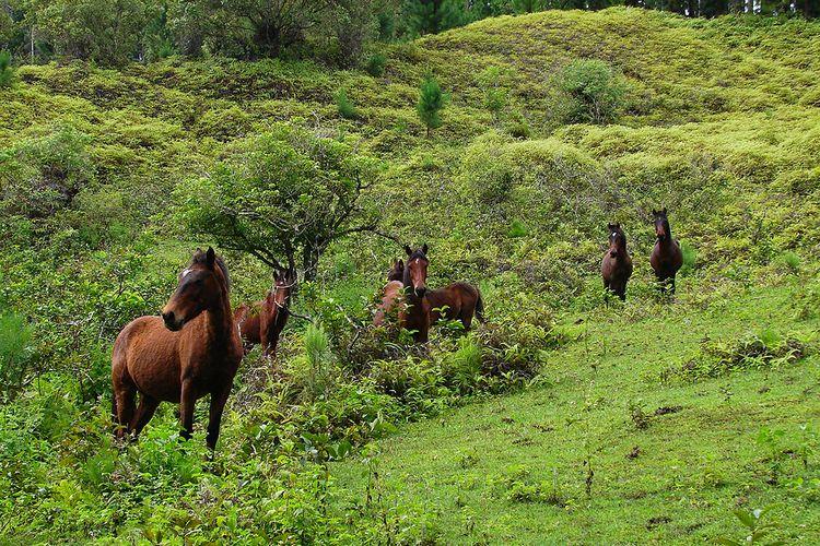 Kuda di desa Anaho dan Hatiheu