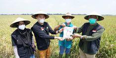 Maksimalkan 200 Hektar Sawah Di Cirebon, Dompet Dhuafa Kolaborasi dengan 173 Petani