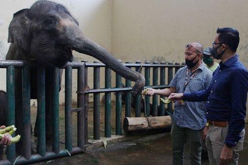 Hero Pasok Pakan Satwa Taman Safari Indonesia
