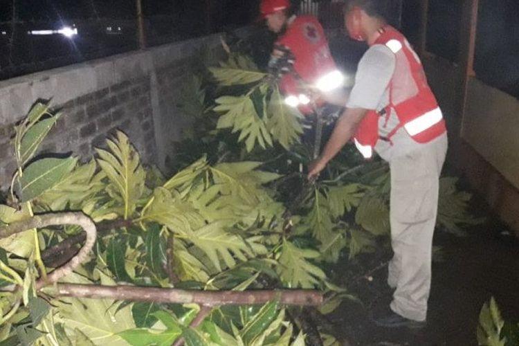 Sukarelawan SIBAT PMI Kota Sukabumi saat membersihkan batang pohon yang tumbang akibat bencana angin kencang di Sukabumi, Rabu (23/9/2020).