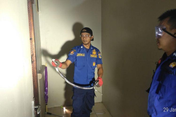 Petugas berhasil menangkap satu ekor ular kobra di wilayah Kembangan, Jakarta Barat
