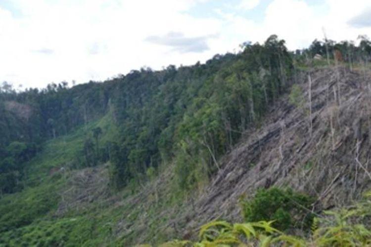 Ilustrasi taman nasional di Bengkulu
