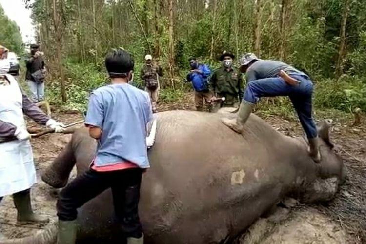 Petugas BBKSDA Riau melakukan nekropsi terhadap bangkai gajah sumatera yang ditemukan mati di areal perusahaan PT Arara Abadi di Desa Koto Pait, Kecamatan Talang Mandau, Kabupaten Bengkalis, Riau, Sabtu (8/2/2020).