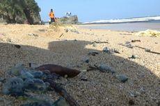 Nekat Datangi Pantai di Gunungkidul yang Belum Dibuka, Puluhan Warga Disengat Ubur-ubur