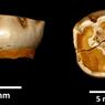 Studi Baru Ungkap Anak Neanderthal Tumbuh Layaknya Manusia Modern