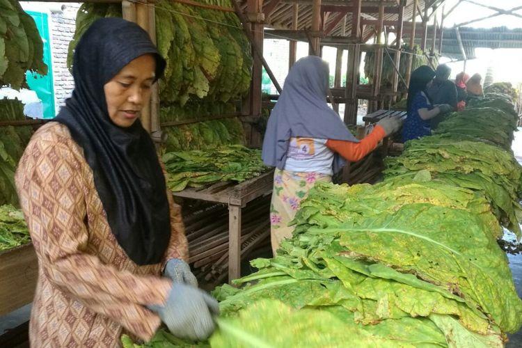 Pekerja PT Sadana Arifnusa sedang memilah daun Tembakau Virginia Lombok di Desa Puyung, Lombok Tengah, Kamis (7/9/2017)