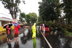Aning Tak Percaya Selamat dari Pohon Roboh yang Timpa Honda Brionya
