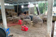 Polisi Gerebek Praktik Judi Sabung Ayam di Citayam