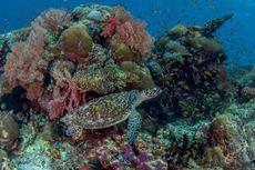 Yuk, Ikut Lindungi Laut Indonesia Lewat Aplikasi