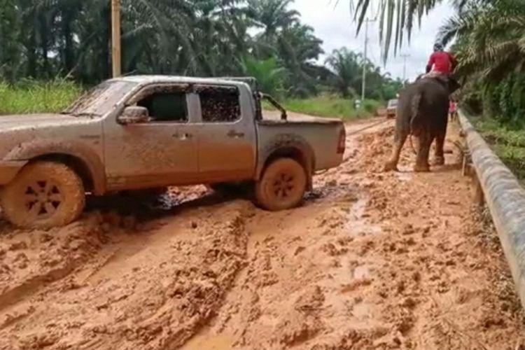 Gajah betina jinak bernama Puja sedang menarik sebuah mobil double cabin yang terperosok ke dalam lumpur saat menuju PLG Sebanga di Desa Muara Basung, Kecamatan Pinggir, Kabupaten Bengkalis, Riau, Selasa (17/11/2020).