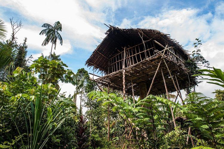 Rumah pohon di Papua DOK. Shutterstock/Sergey Uryadnikov