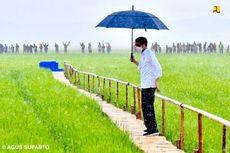 Jokowi Sebut Tak Akan Impor Beras hingga Juni, Harga Gabah Petani Bakal Naik?