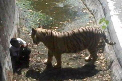 Ingin Lihat Harimau Pembunuh, Warga Padati Kebun Binatang Delhi
