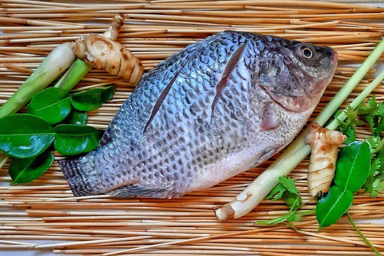 Ikan nila atau tilapia.