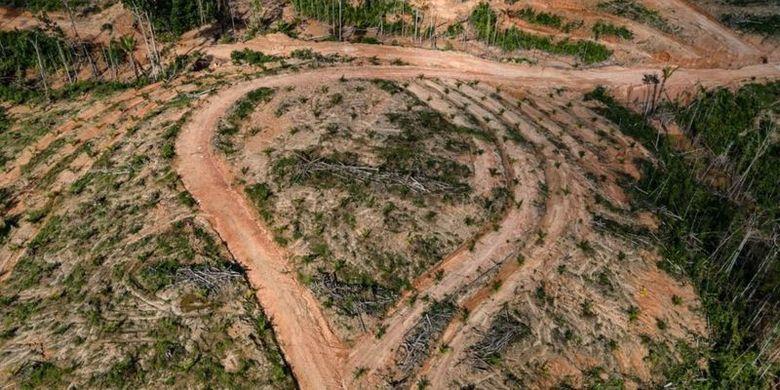 Hutan primer Papua kini mulai beralih fungsi menjadi kebun kelapa sawit. Foto diambil tahun 2018.