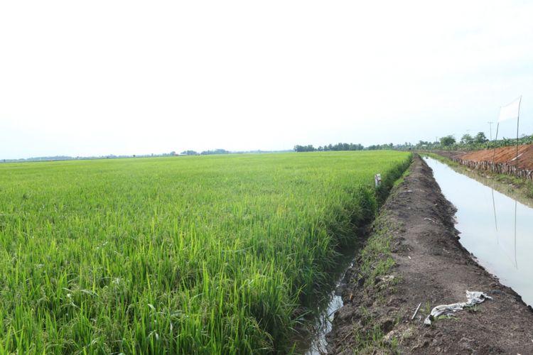 Petani di Karawang berhasil panen pada musim kemarau 2018