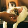 Tips Memperkenalkan Kucing Baru ke Kucing Lainnya di Rumah