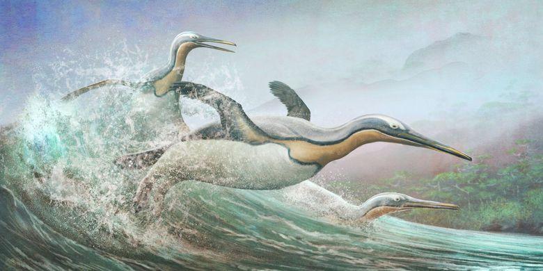 Penguin raksasa, seperti Kumimanu ini, pernah hidup di Aotearoa Selandia Baru sekitar 60 juta tahun yang lalu memiliki kemiripan yang mencolok dengan beberapa plotopterid.