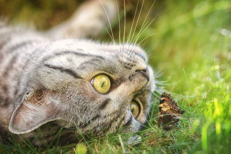 Kucing bermain dengan kupu-kupu.