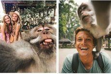 Video Cara Monyet Selfie Diambil di Monkey Forest Ubud Bali