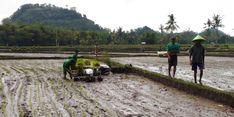 PB HMI Nilai Kinerja Pangan Era Jokowi Mengalami Kemajuan