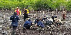 Jaga Kawasan Pantai Papua, Sejumlah Relawan Lakukan Sulam Mangrove