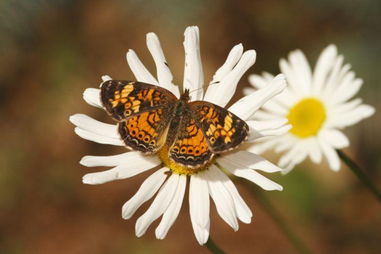 Ilustrasi simbiosis mutualisme