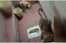 Video Anjing 7 Jam Terkurung Bersama Macan Tutul, Akhir Ceritanya Mendebarkan