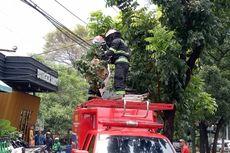 Damkar Tangsel Evakuasi Sarang Tawon Vespa di Bintaro yang Resahkan Warga
