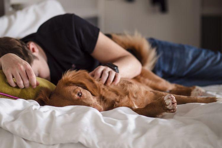 ILustrasi tidur bersama hewan peliharaan