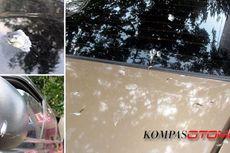 Bahaya Kotoran Burung dan Getah Pohon pada Cat Mobil